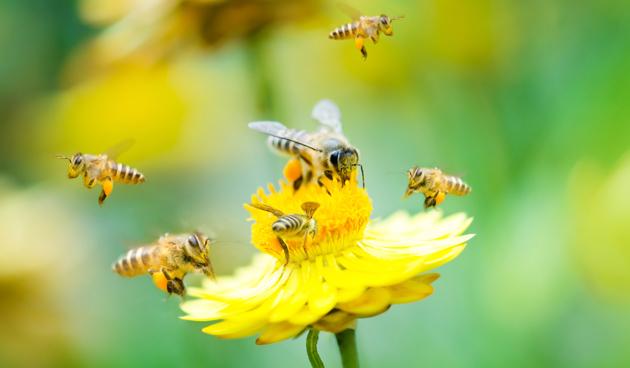 Bijen-en-cafeine-shutter-63
