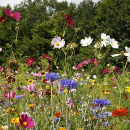 Bijen Bloemen