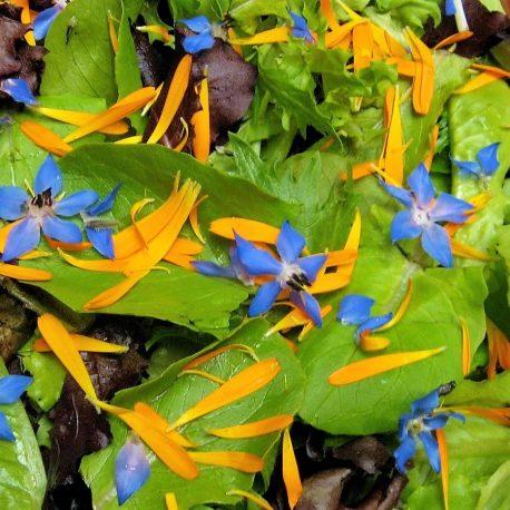 eetbare bloemen2