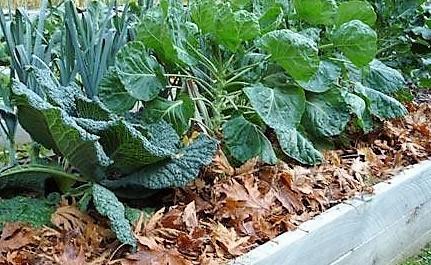 Tuinieren voor luie mensen :-)